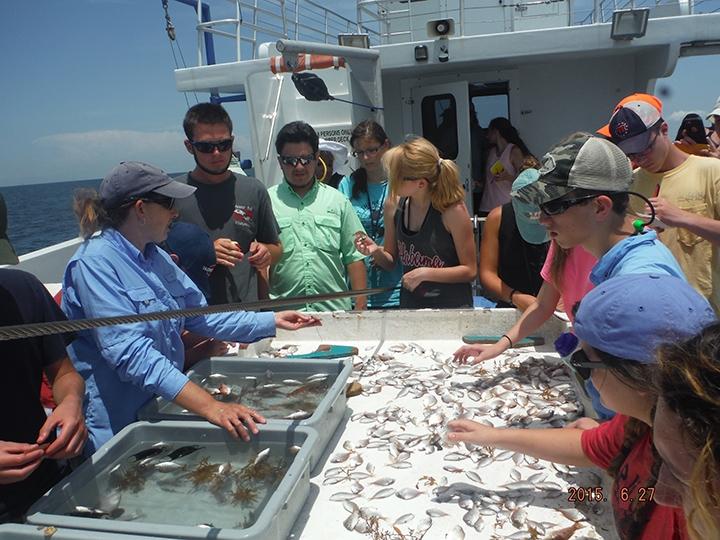 Photo credit: Dauphin Island Sea Lab