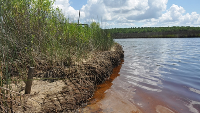 This coir log at the Grand Bay National Estuarine Research Reserve in Mississippi is part of a living shorelines project. It protects the shoreline without blocking the connection between the land and water.