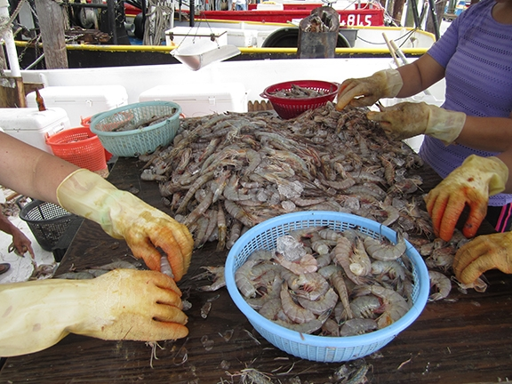 Headless shrimp costs a bit more per pound at the harbor behind the Hard Rock Casino in Biloxi.