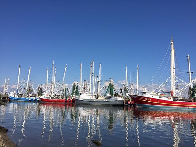 Shrimp boats line a dock in Biloxi, Mississippi.