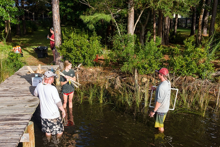 Scientists install a living shoreline as part of research project at a residence in Perdido Beach, Alabama. (Photo by Joe Wise)