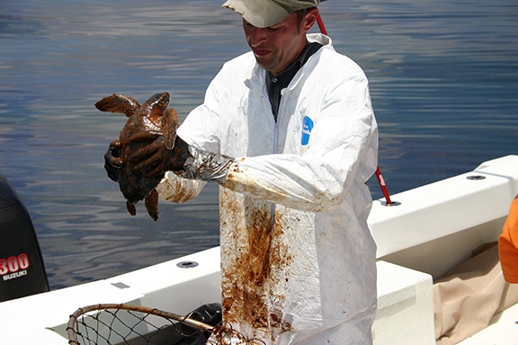 A National Oceanic and Atmospheric Administration (NOAA) veterinarian prepares to clean an oiled Kemp's Ridley turtle as part of the Deepwater Horizon oil spill animal rescue and rehabilitation efforts. Photo credit: NOAA and Georgia Department