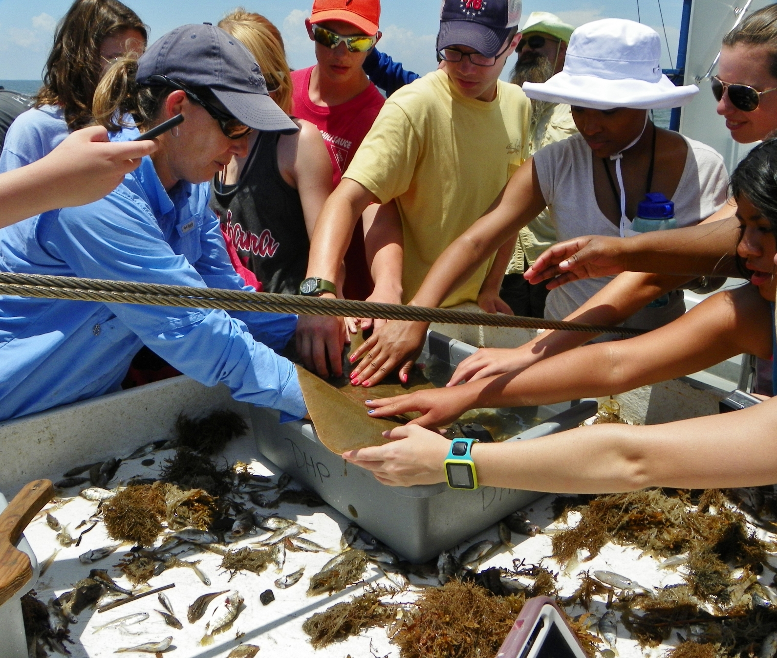 Dauphin Island Sea Lab Educator Joan Nichols shows students a butterfly ray aboard the RV Alabama Discovery. (Credit: DISL-Discovery Hall Programs)