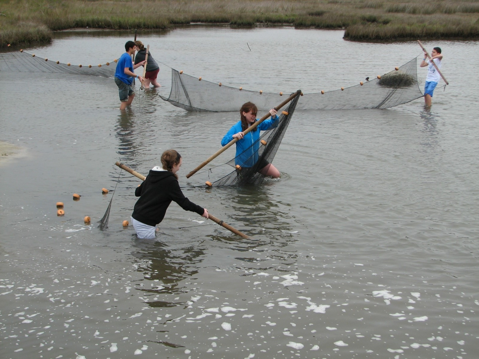 Middle school students seine a salt marsh to discover what lives there. (Credit DISL-Discovery Hall Programs)