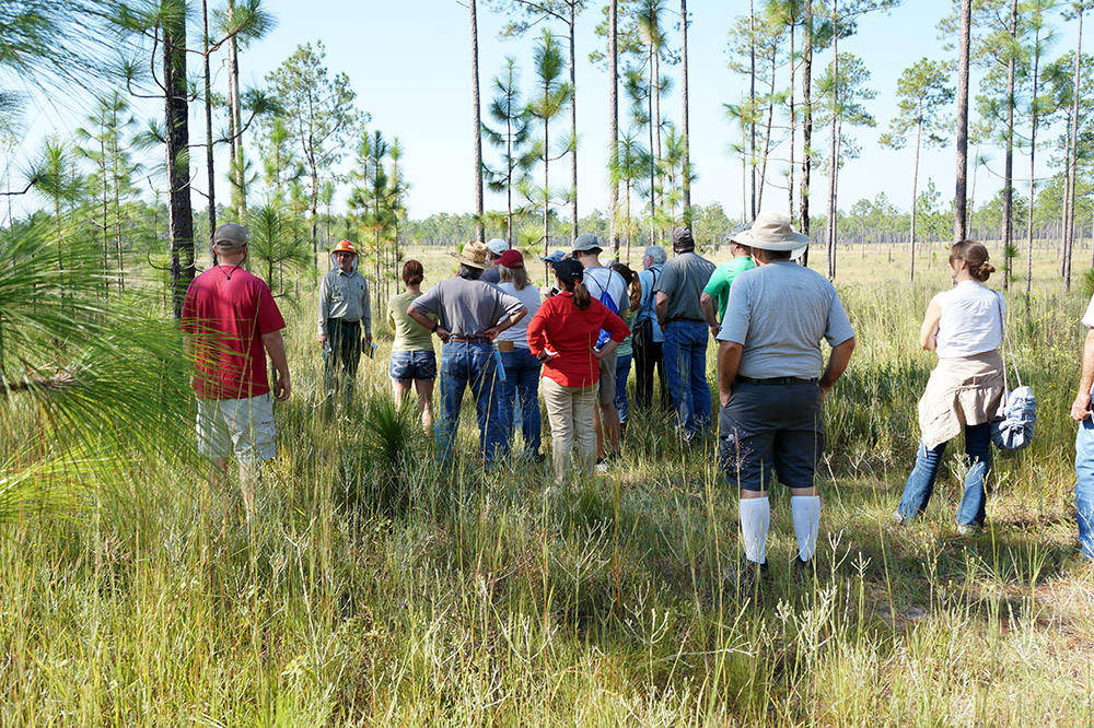 Master Naturalist students learn about forestry at a Longleaf pine plantation.