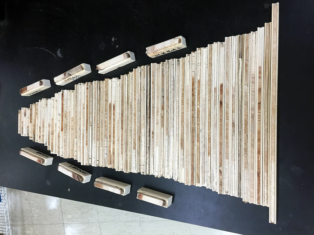 Tree ring core samples are analyzed in a lab.