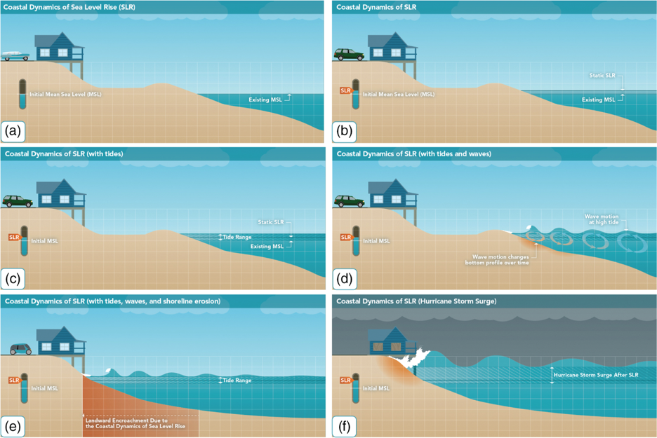 Image from Passeri, D. L. et al. (2015). The dynamic effects of sea level rise on low-gradient coastal landscapes: A review. Earth's Future, 3(6), 159-181. Click image for link to original.