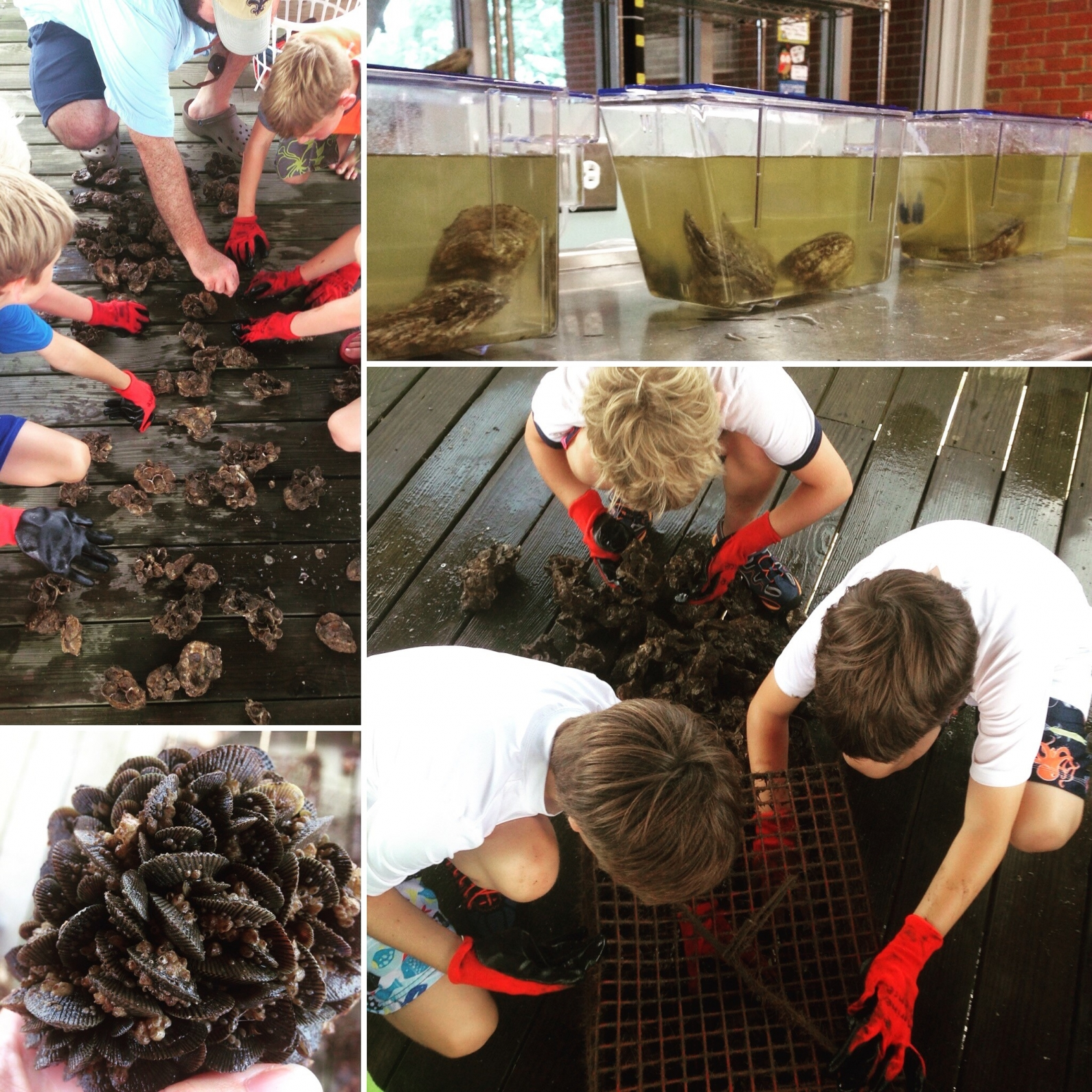 Marine science campers at St. Stanislaus High School in Bay St. Louis, Mississippi, learn about oysters and oyster gardening.