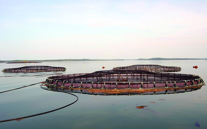 These Atlantic salmon net pens can be found in Lubec, Maine. At present, no finfish aquaculture facilities are operating in the Gulf of Mexico. (Photo by Chris Bartlett/Maine Sea Grant)