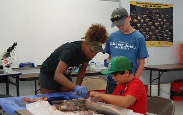 2017 Intern Jordan Brown helps students during a shark dissection lesson.